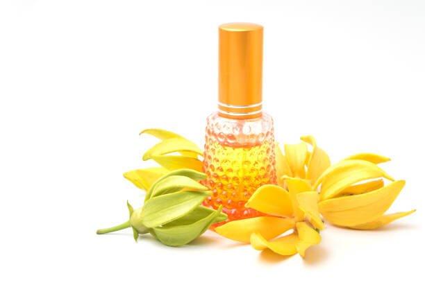 Olio essenziale di Ylang Ylang: estrazione, purezza e benefici